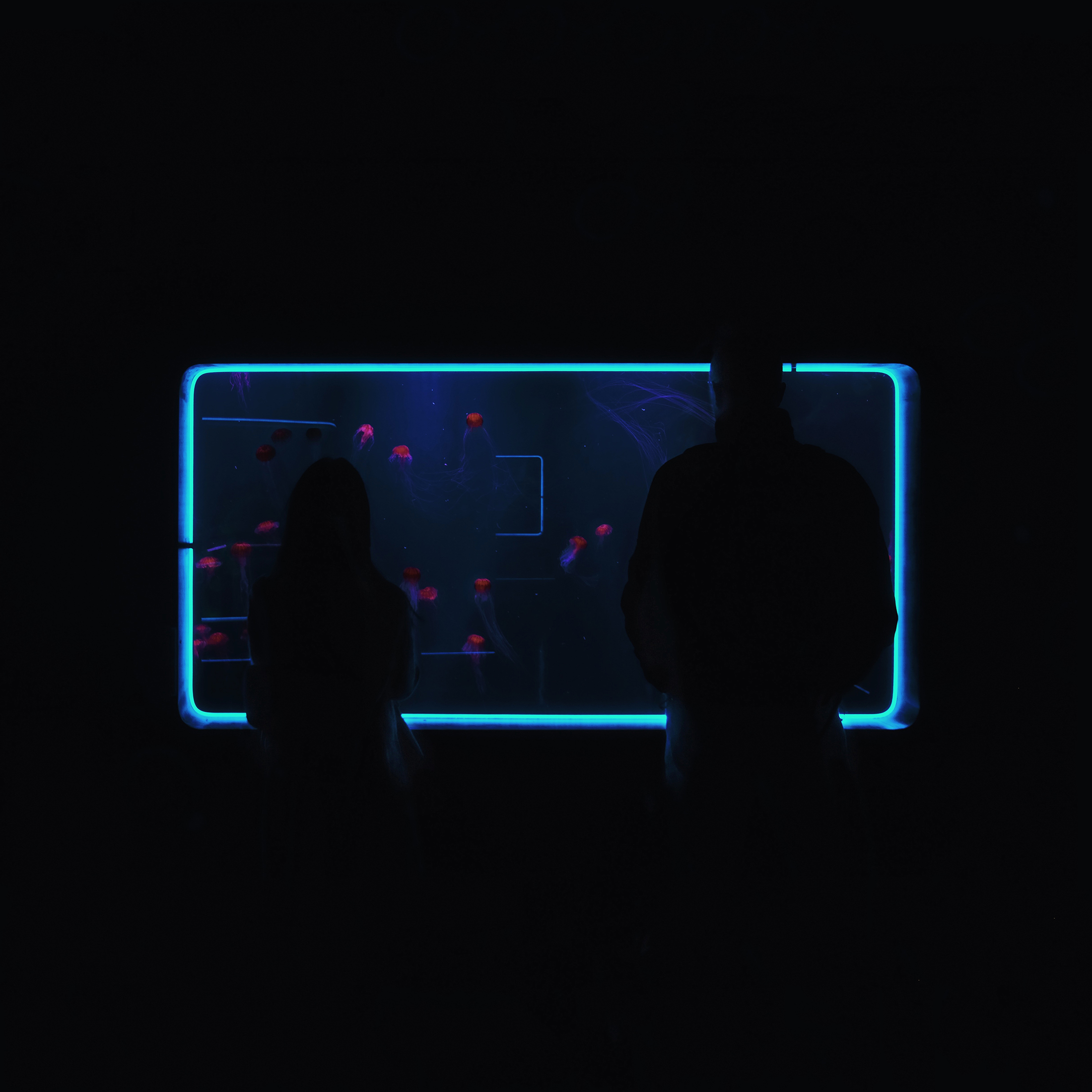 neon-jellyfish